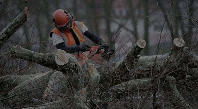 North Chesterfield Tree Service